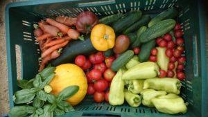 Zelenina z Ekologického poľnohospodárstva
