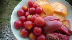Ako si dopestovať veľa paradajok