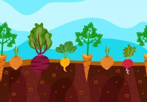 Organické hnojivá