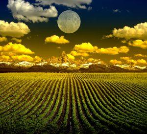 Biologická ochrana viniča