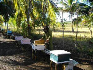 Kubánske včelárčenie