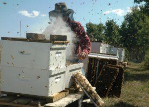 Včelie liečivá
